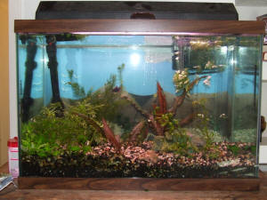 Faqs On Maintaining Planted Tanks